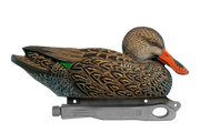 Rugged Northern Shoveler Hen Floater
