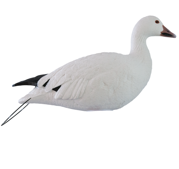 Rugged Series_Snow Goose_Active_RS_Studio