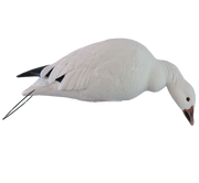 Rugged Series_Snow Goose_Straight Feeder_RS_Studio