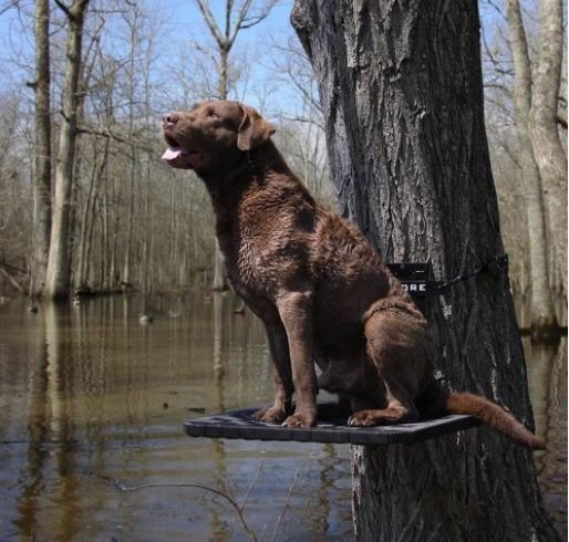 Duck Hunting Dog | Hard Core Brands