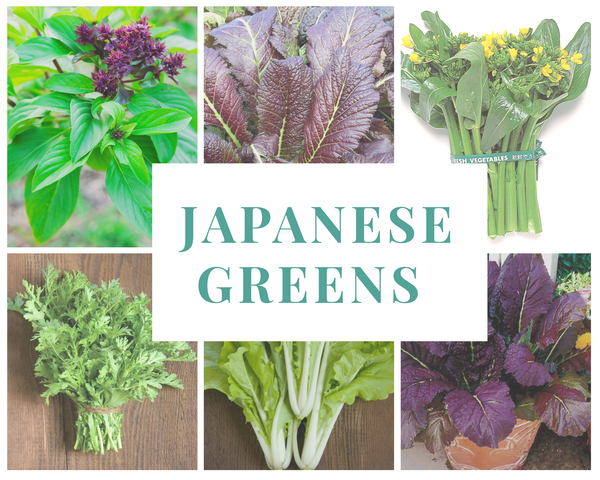 Moss Mama's Hydroponic Japanese Greens Kit (Free Shipping Included)