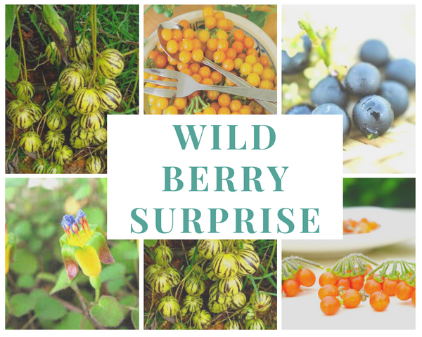 Wild Berry Surprise Tabletop Hydroponics