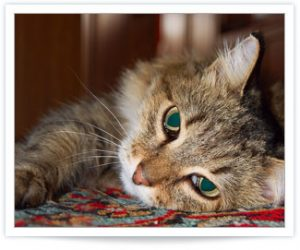 Recognizing and Treating Feline Hyperthyroidism