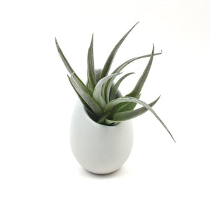 Ceramic Air Planter with Plant