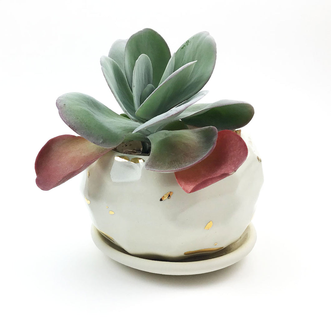 White and Gold Facet Planted Succulent