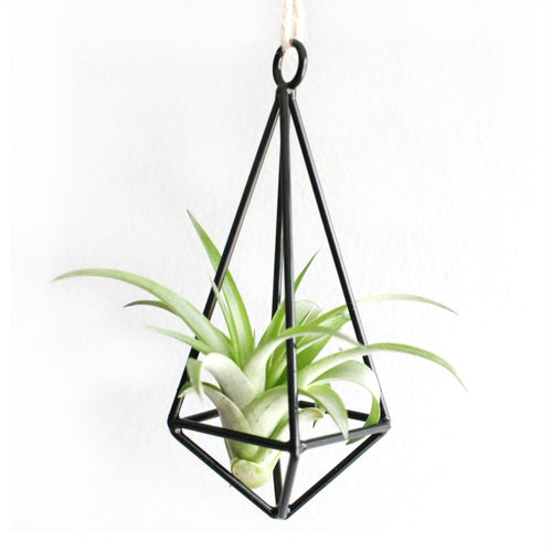 Hanging Wire Air Planter with Plant