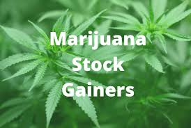 How to trade Marijuana Stock Options Picks , Weekly & Earnings Marijuana Stock Options Alerts 1 Year.