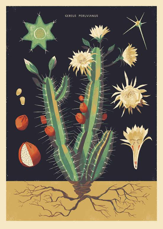 "Chris Turnham ""Night-Blooming Cereus"" Print"