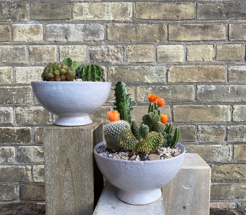 Colourful Cactus Planter