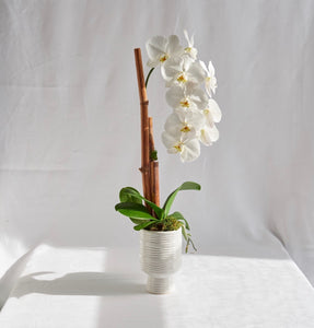 Orchid Planter