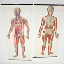 Load image into Gallery viewer, Vintage German mid-century anatomical charts, set of 2