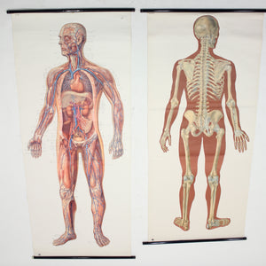 Vintage German mid-century anatomical charts, set of 2