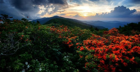 Appalachian Trail North Carolina