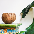 Coconut Candle Holder - GiveMeCocos