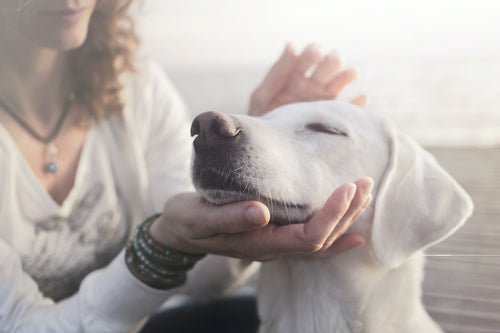 The Top Prevention and Treatment Tips for Dog Asthma
