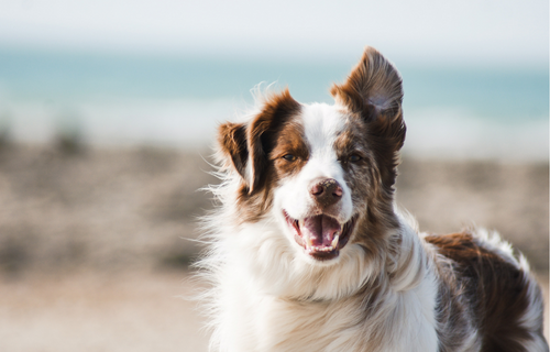 Is a Dog Multivitamin Right for Your Pooch? What You Need to Know