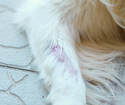 Are There Ways to Protect My Pup From Dog Ringworm?