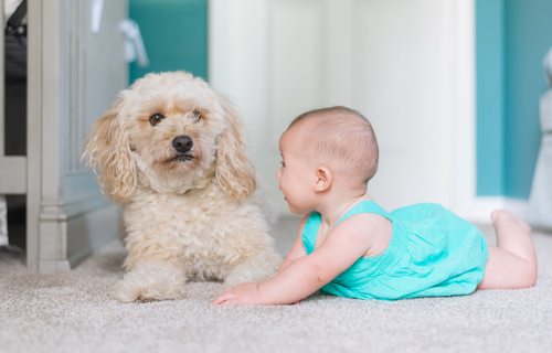 Best Dog Breeds With Kids