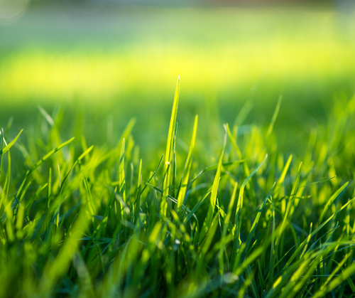 Can Probiotics for Dogs Help Me Keep My Grass Green?
