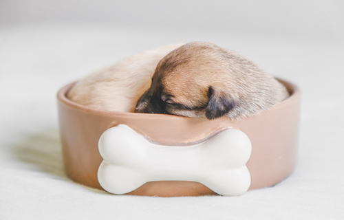 How Much Do Puppies Sleep?
