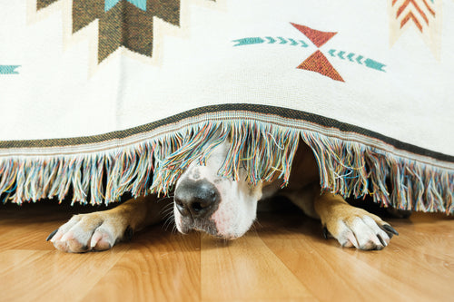 What To Do If You Have a Nervous Dog