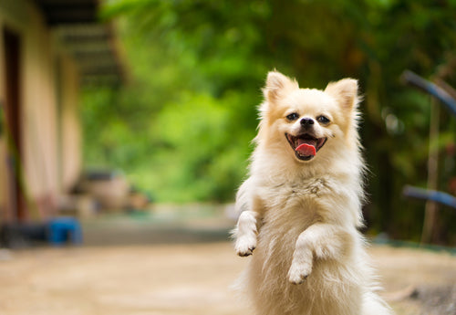 Is Rimadyl Bad for Dogs? – PetHonesty