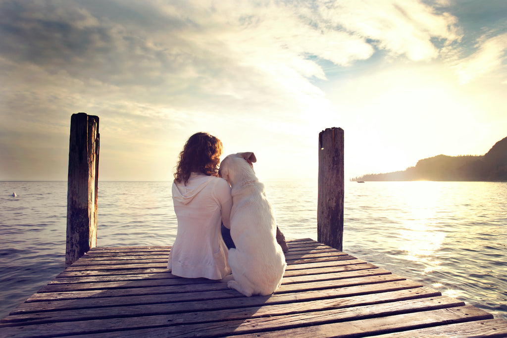 Dog asthma: A dog and its owner sit at the end of a dock and look at the view