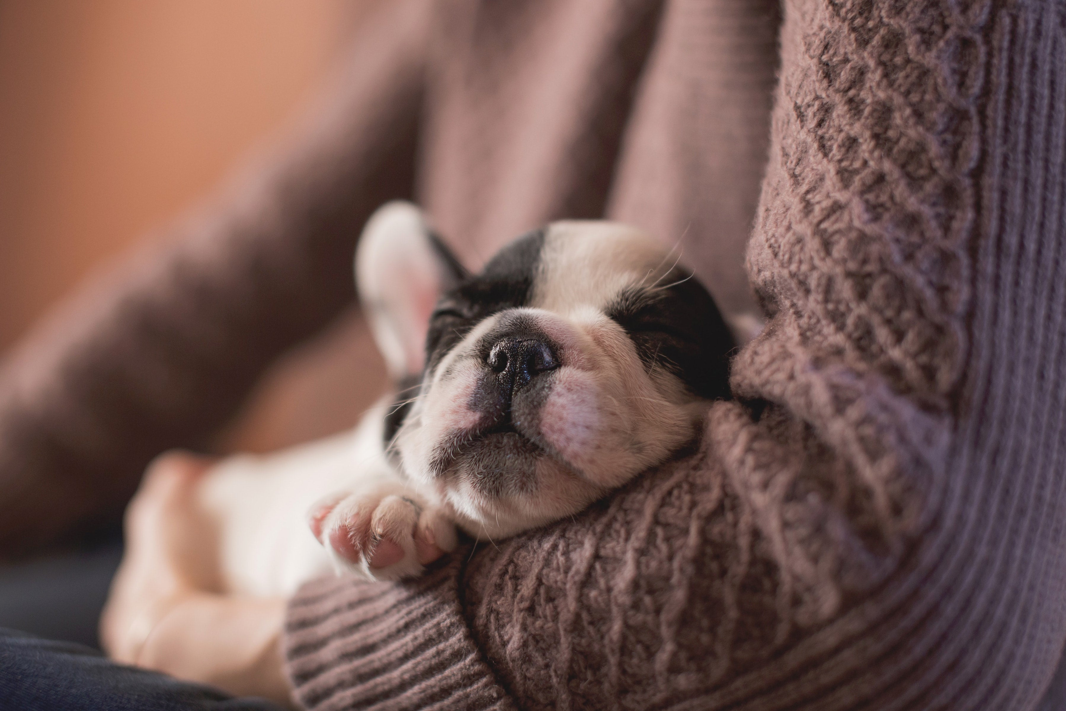 Why puppies sleep so much.