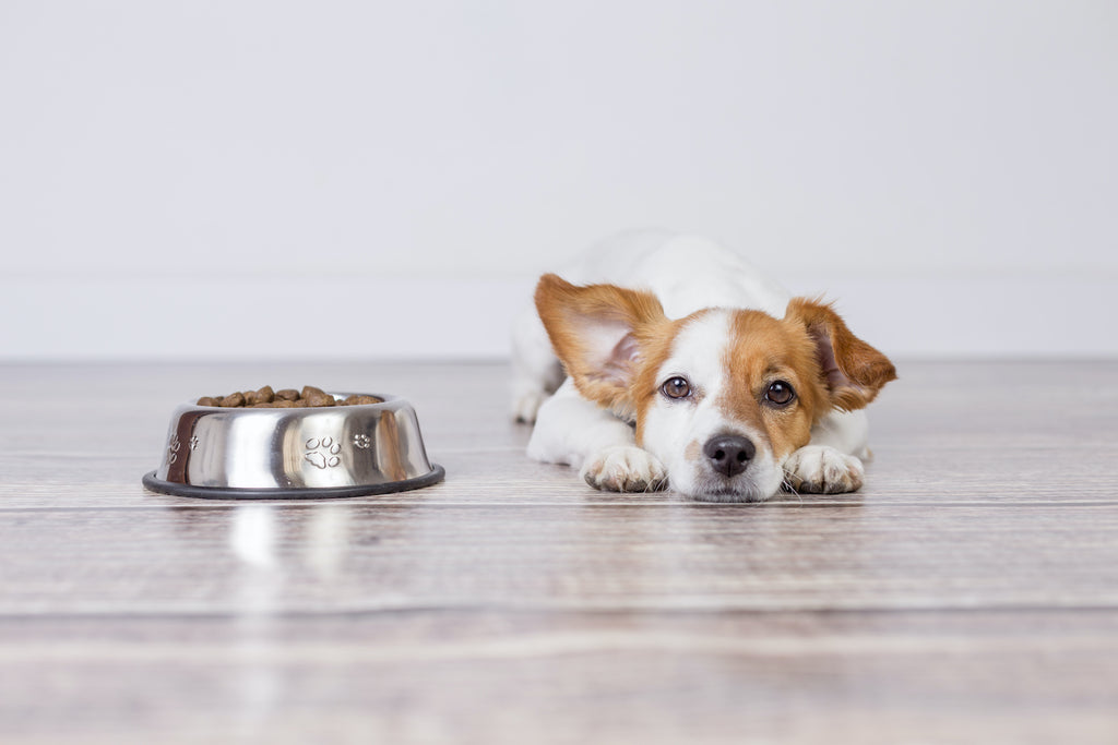 A puppy lies on the floor next to a bowl of sensitive stomach dog food