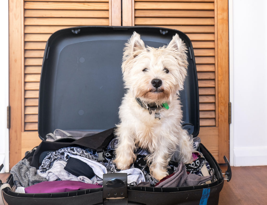 Anxiety in dogs: A dog sits in an owner's suitcase