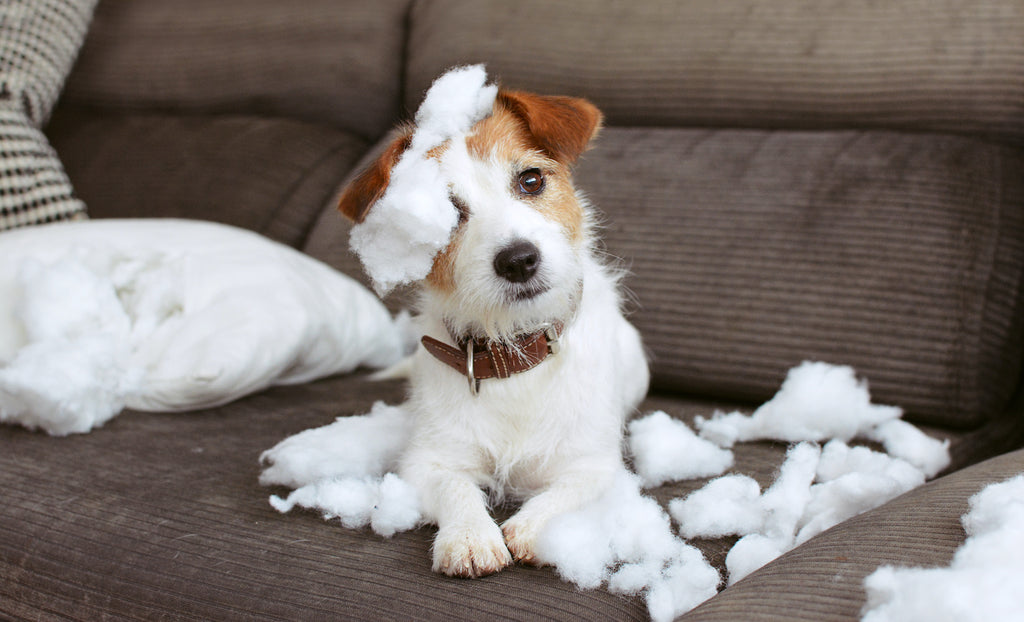 Anxiety in dogs: a dog with a destroyed pillow