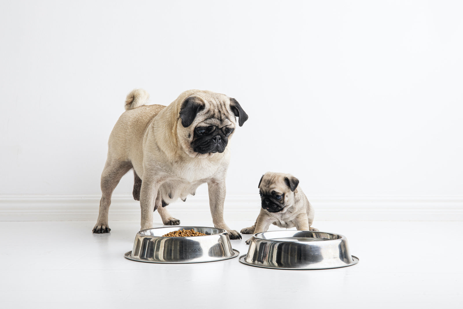 Dog food for allergies: A pug mom and puppy stand in front of dog food bowls