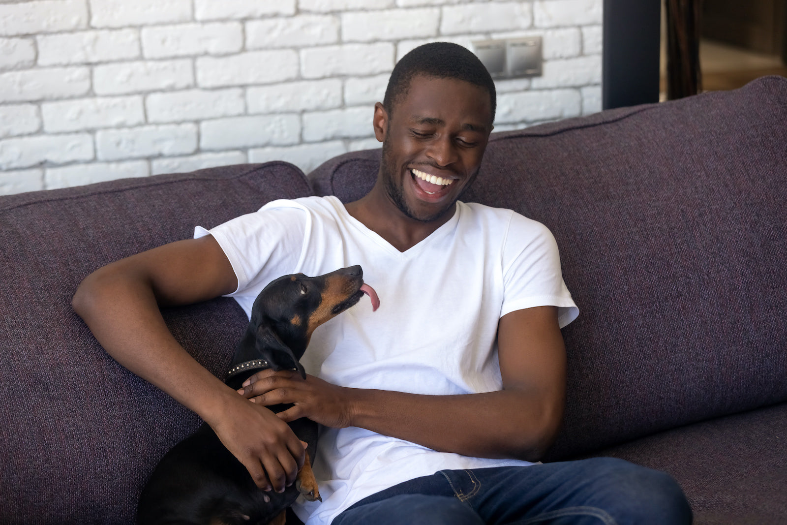 Dog has bad gas suddenly: A man laughs with his dachshund