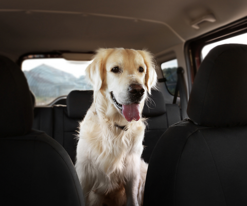 Dog sitting happily in the backseat of a car