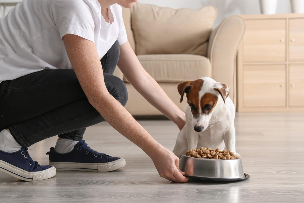is fish oil good for dogs: eating dog