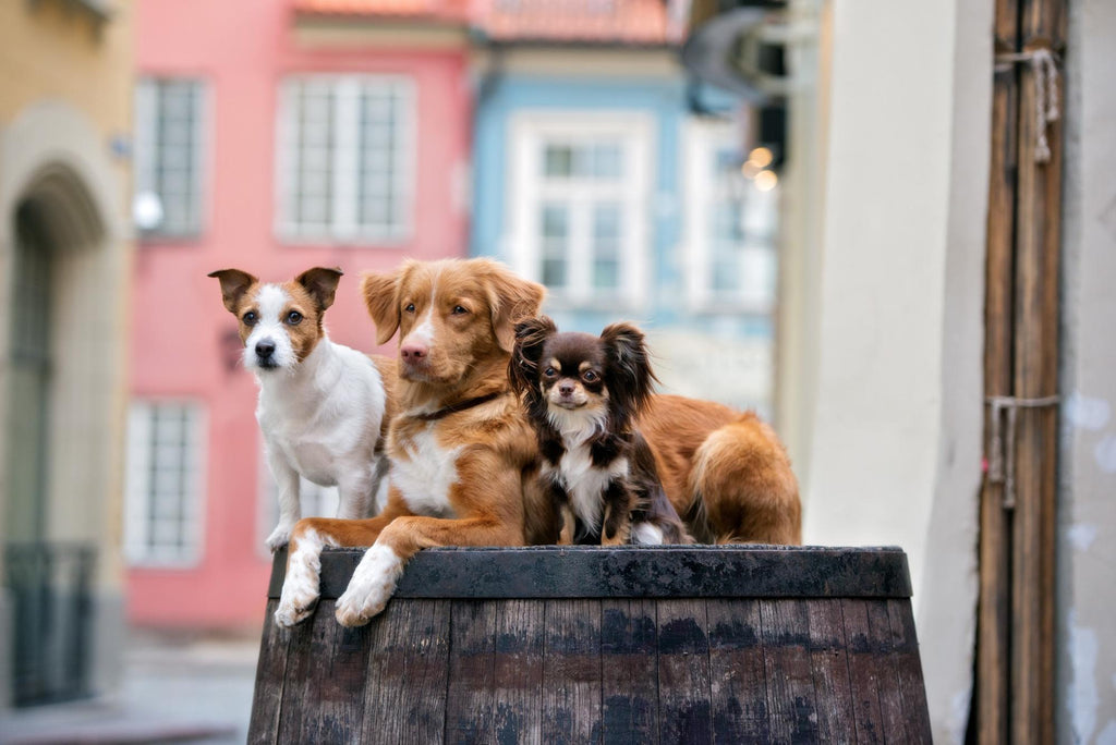 three different dog breeds on top of a wooden tank