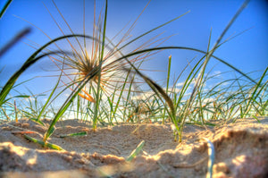 Tumble Grass - Kawana - Surf Art Apparel