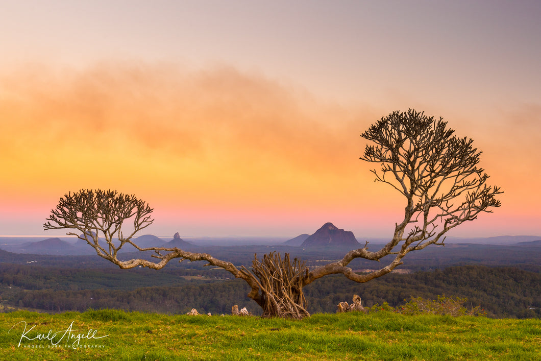 Overy Tree - Glasshouse Mountains - Surf Art Apparel