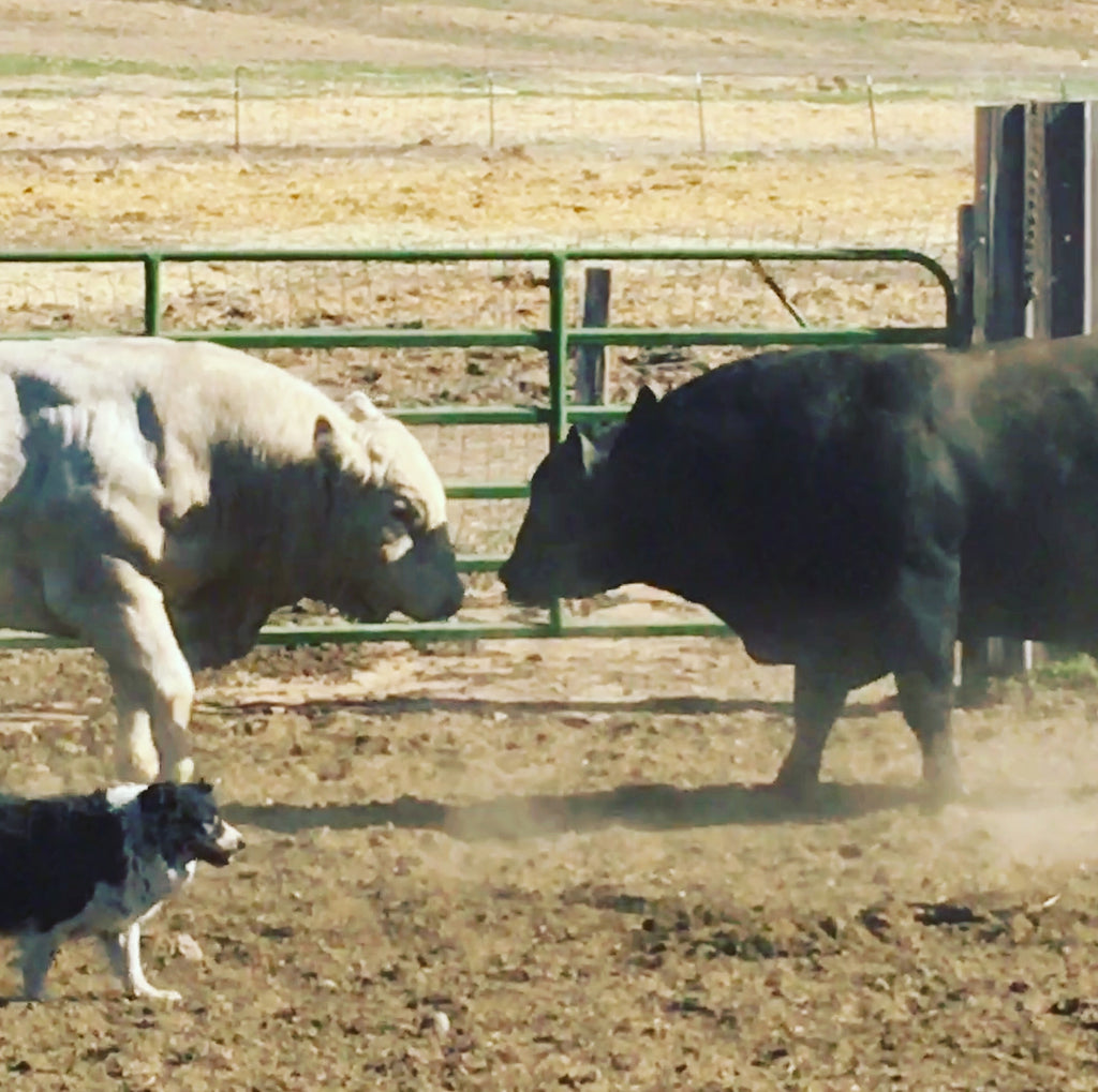 Day 11 of our 12-Day Ranching Journal