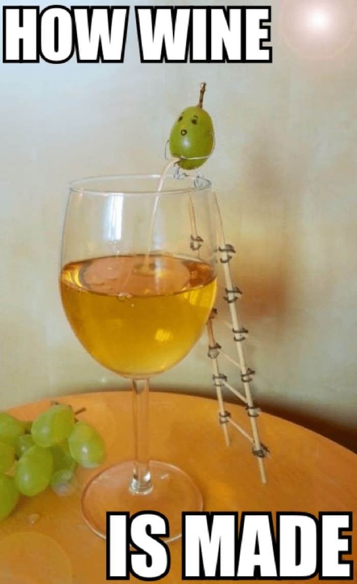 grapeandwhiskey grapes wine wines tasting winetasting winelover glass friends love cheers winememes meme memes winejokes