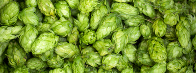 Science-Based Health Benefits of Hops