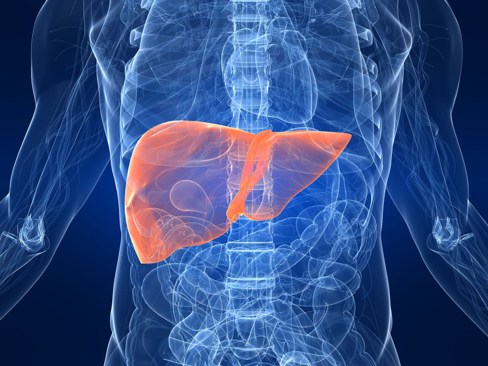 The Best Science-Backed Supplements for Liver Health