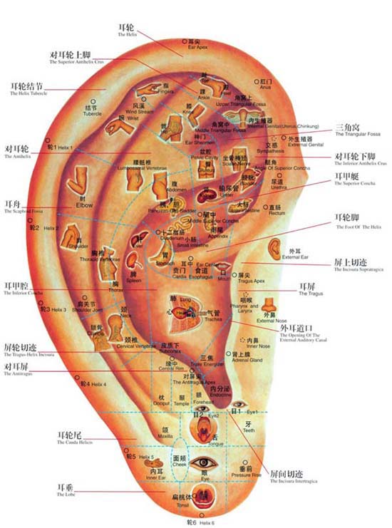 Auricular Acupuncture Point Search. Ear Detection Pen. Ear Acupoint Search. for Ear Auriculotherapy Acupressure Earrings