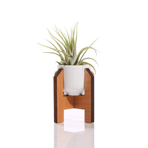 Mini Planter with air plant