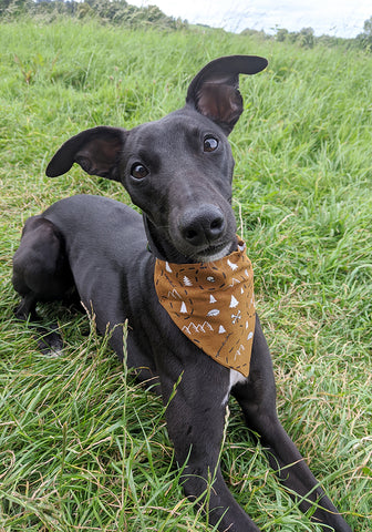 Ethical Dog Bandana - Tan