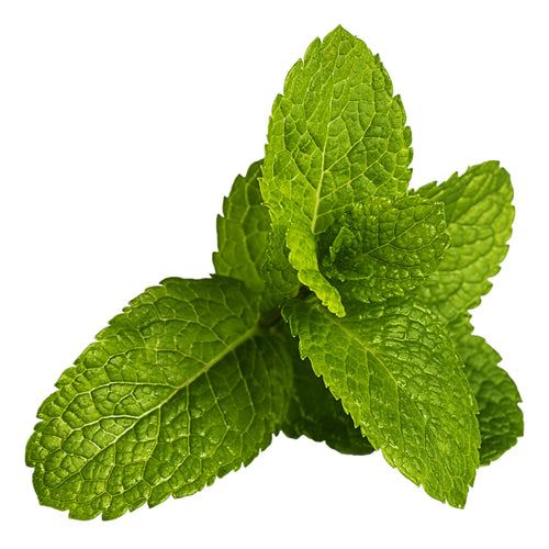E-Flavors - Spearmint Flavor Concentrate Flavouring Concentrate Nicvape Inc.
