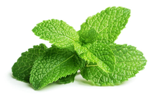 E-Flavors - Peppermint Flavor Concentrate Flavouring Concentrate Nicvape Inc.