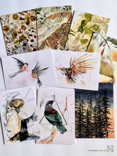 Load image into Gallery viewer, NZ Birds & Botanicals Mixed Pack - 10