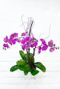 3 Stem Purple Phalaenopsis Orchid Plant Gift Set. Floral Bouquets in classic vase. Get fresh flowers from Flowers.IE. Same day flower delivery available.