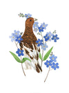 Alaska Willow Ptarmigan Print